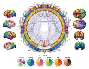 """Diese Visualisierung zeigt Daten aus der Hirnforschung. Sie gewann zwar in der """"2012 Brain-Art Competition"""", für ein journalistisches Medium wäre sie aber vermutlich zu komplex. Bild: Ars Electronica/Flickr"""